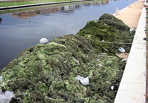 Identifying algae by Aquatic Technologies
